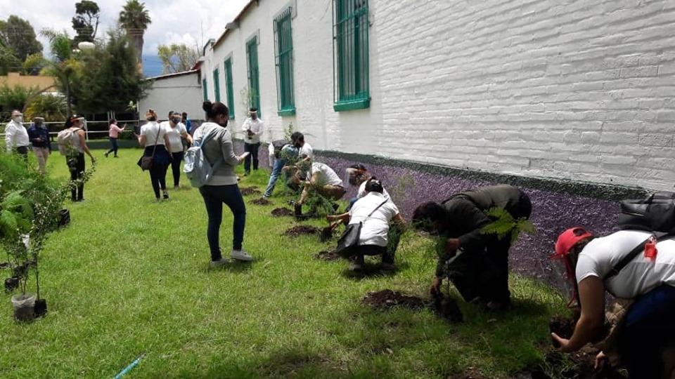 cepes-reforestacion3